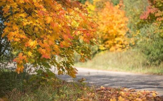 小学一年级作文:秋天的景色.jpg
