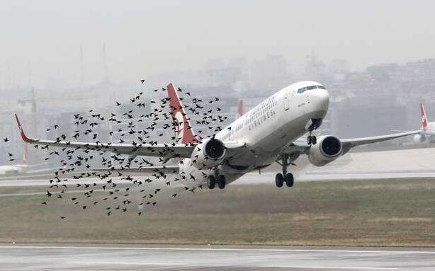 """为机场""""让出生命通道""""点赞-高三作文800字.jpg"""