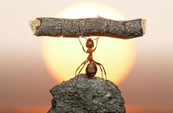 如果蚂蚁的个头比树还大作文350字-四年级.jpg