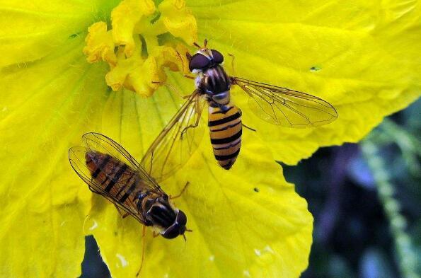 蜘蛛和蜜蜂-描写动物的作文500字.jpg