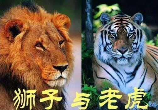 老虎和狮子作文450字-五年级.jpg