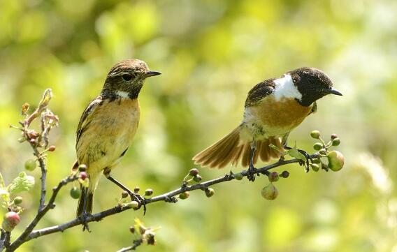 两只小鸟作文150字