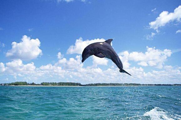 一只海豚的自述作文800字