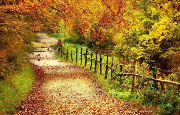 秋天的风景作文800字
