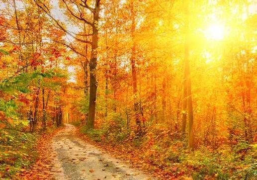 美丽的秋天作文600字