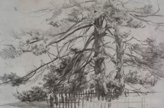 暴风雨的三幅素描作文300字