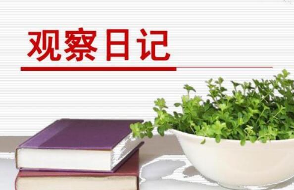观察日记作文800字植物