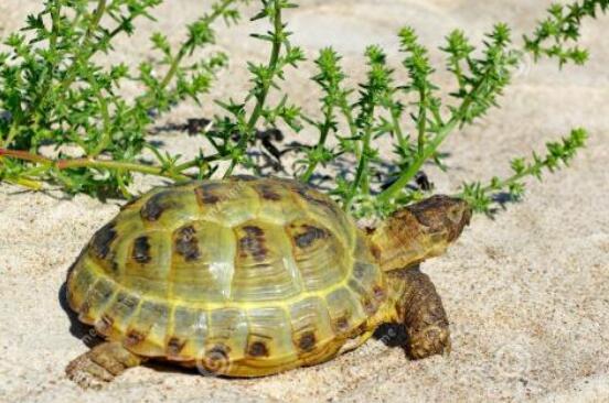 小乌龟孵化记.jpg