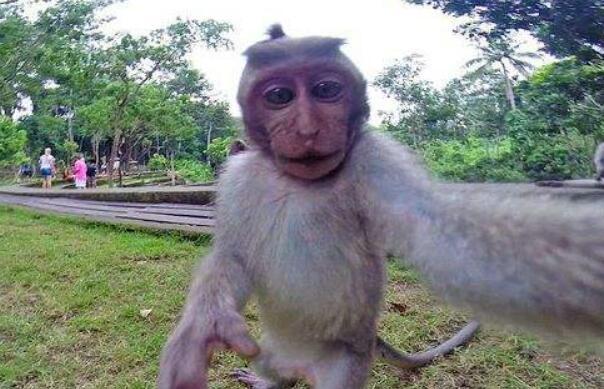 逗人的小猴子作文300字