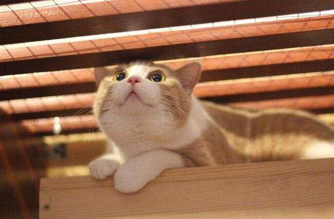 聪明的小猫.jpg