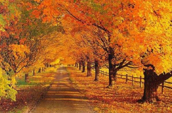 秋天的色彩作文500字