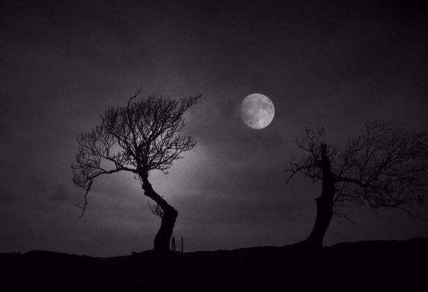 那一夜的月光作文700字