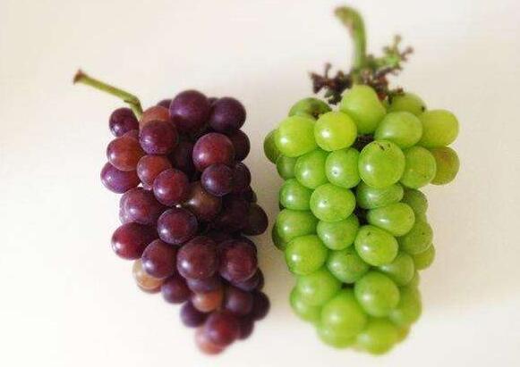我最喜欢的水果葡萄.jpg