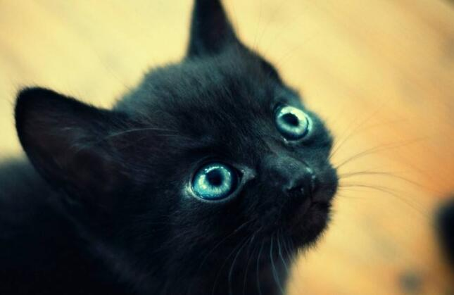 可爱的小黑猫.jpg