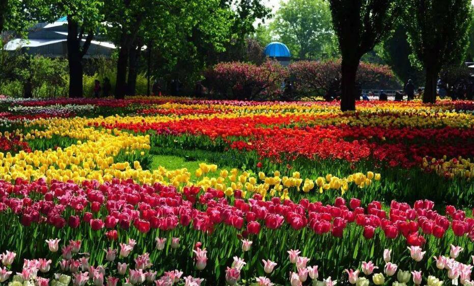 美丽的植物园.jpg