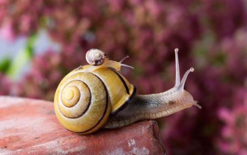 观察蜗牛作文500字七年级