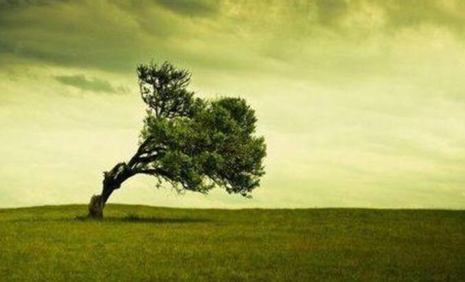 心中有阳光600字_让生命站立成树作文600字 - 求索作文网