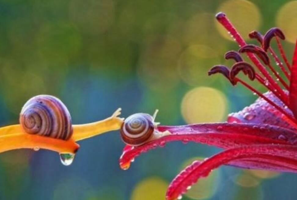 小蜗牛历险记作文600字