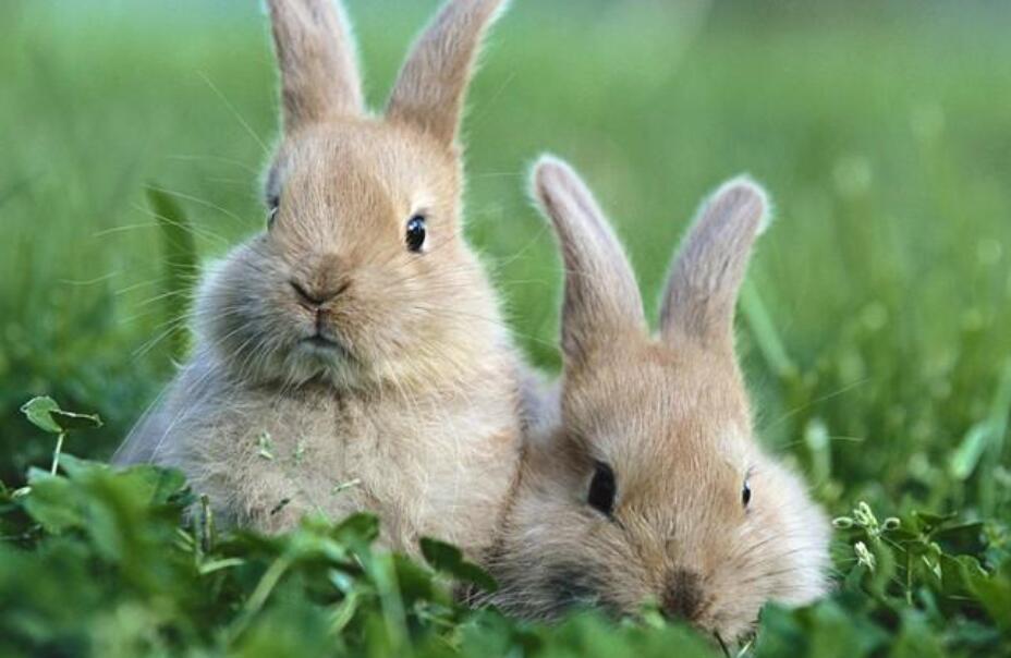我的动物朋友小白兔作文500字